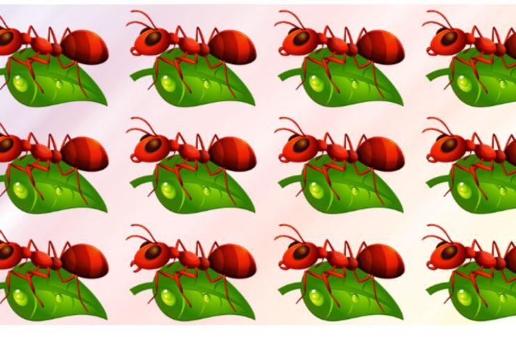 Чем отличается муравей?