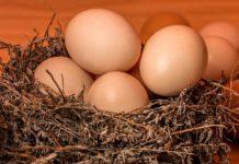 Производство яиц
