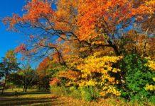 Осенний погожий день