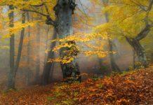 Утро,туман, осень, лес.